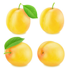 Set of ripe yellow plums isolated