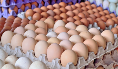 Sale of domestic chicken eggs on the market