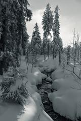 Winterharz