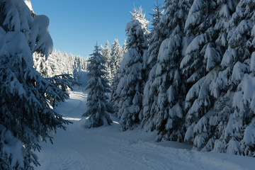 Winterwanderung im Harz