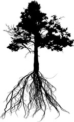 pine old tree black silhouette with root