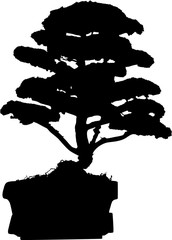 bonsai tree in pot silhouette isolated on white