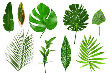 Different tropical leaves on white background Wall mural