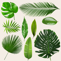 Different tropical leaves on light background