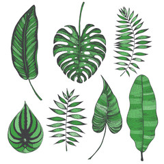 Palm leaves set. Vector collection with tropical leaves. Calathea, monstera, peperomia, chamaedorea, philodendron, banana leaves illustration. Colorful palm leaves.