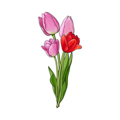 Hand drawn bunch of three side view pink tulip flower, sketch style vector illustration isolated on white background. Realistic hand drawing of three tulip flower bouquet, decoration element