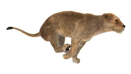 3D Rendering Female Lion on White