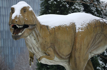 A snow covered T-Rex life size dinosaur sculpture is pictured at the Senckenberg Natural History Museum in Frankfurt