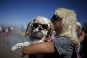 A woman holds a dog wearing sunglasses as she watches the Surf City Surf Dog Contest in Huntington Beach