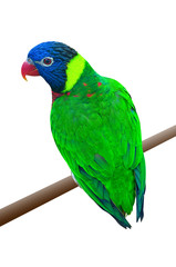A green parrot on a branch