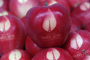 Apples marked with the logo of the World Climate Change Conference 2015 are in this illustration picture at the Laquenexy Fruit Gardens