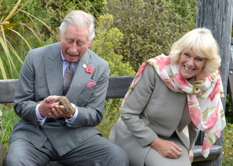 Britain's Prince Charles reacts after a large bumblebee briefly landed on the Prince's pants and flew away as he handles a native tuatara lizard during a visit to the Orokonui Eco sanctuary with Camilla, Duchess of Cornwall, near Dunedin