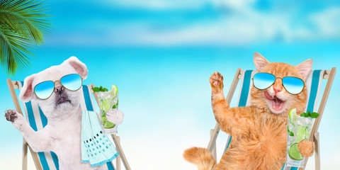 Cat  and dog relaxing sitting on deckchair with cocktail on the sea background.
