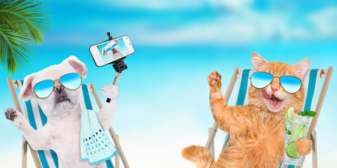 Cat  and dog wearing sunglasses relaxing sitting on deckchair on the sea background.