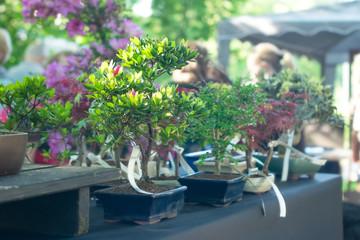 Miniature Bonsai Trees  on the street