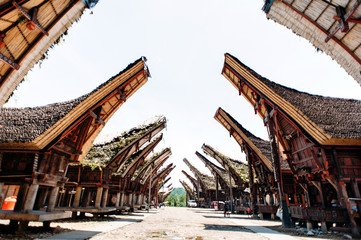 Main street of traditional Tana Toraja village with buffalo in the foreground , tongkonan houses and buildings. Patawa, Rantepao, Sulawesi, Indonesia