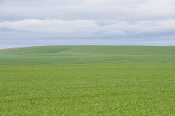 Field of green grass under blue sky