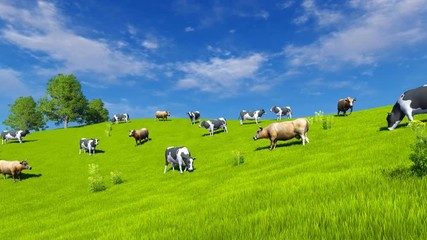 Wall Mural - Countryside scenery with a herd of mottled dairy cows grazing on green pasture under blue cloudy sky at spring day. Realistic 3D animation rendered in 4K