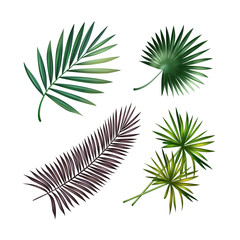 Wall Mural - Set of palm leaves