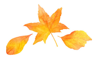 Set of three golden watercolor leaves on white background