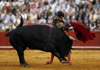 Spanish matador Morante de la Puebla performs a pass to a bull during a bullfight in Seville