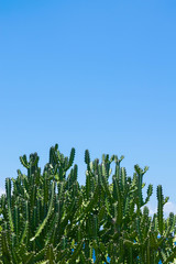 Cactus and blue sky