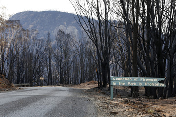Damaged sign prohibiting the collection of firewood stands on a road leading through a bushfire-damaged forest near Coonabarabran