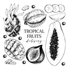 Vector hand drawn exotic fruits. Engraved smoothie bowl ingredients. Tropical sweet food delivery. Pitaya, carambola, papaya, mango, fig, acai.