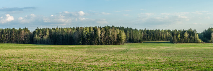 Spring landscape. Beautiful panoramic view across the field to the coniferous forest