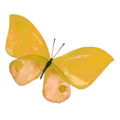 Drawing a watercolor yellow butterfly