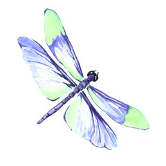 Watercolor color dragonfly drawing