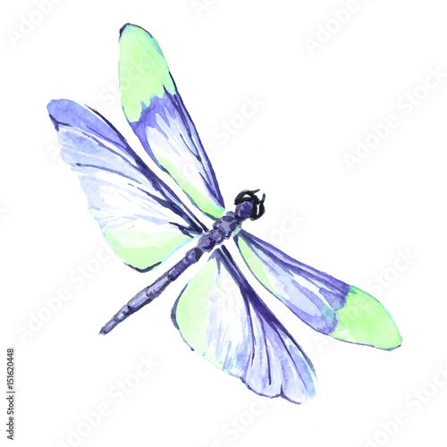Watercolor Color Dragonfly Drawing Stock Image And Royalty Free