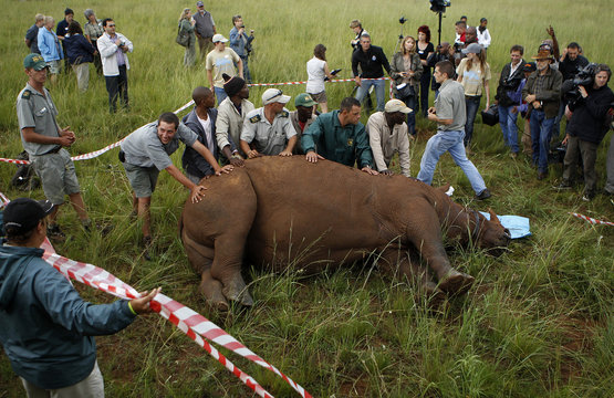 Workers hold a rhino during a media demonstration at the Rhino and Lion Nature Reserve, in the Cradle of Humankind outside Johannesburg