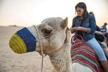 Camel riding in Dubai desert.