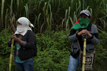 "Members of the Nasa indigenous tribe and ""Liberation of Mother Earth"" movement stand on a sugar cane field they claim as their ancestral lands in Corinto"