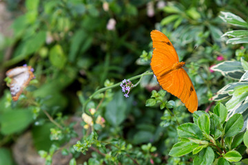 A Butterfly on Foliage