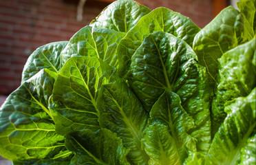 Green romaine lettuce – source of vitamins