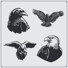 Set of birds. Ravens and eagles.