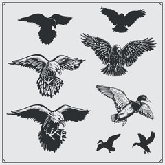 Set of birds. Ravens, eagles and ducks.