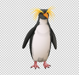 Macaroni penguin on transparent background
