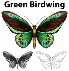 Doodle animal for green birdwing