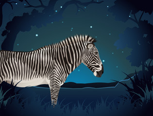 Zebra in the forest at night