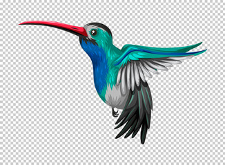 Hummingbird flying on transparent background