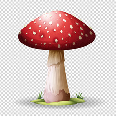 Red mushroom on transparent background