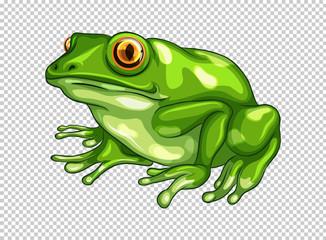 Green frog on transparent background