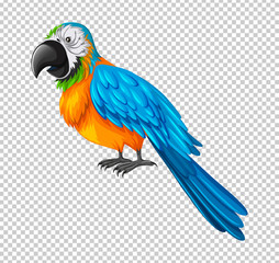 Colorful parrot on transparent background