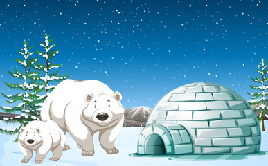 Polar bears standing near igloo at night
