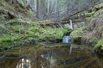 Stream in a natural untouched forest in sweden