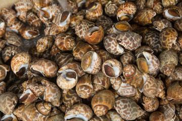 Snail in market (snail background)