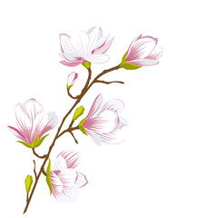 Cute Magnolia Branch, Blossom Flowers